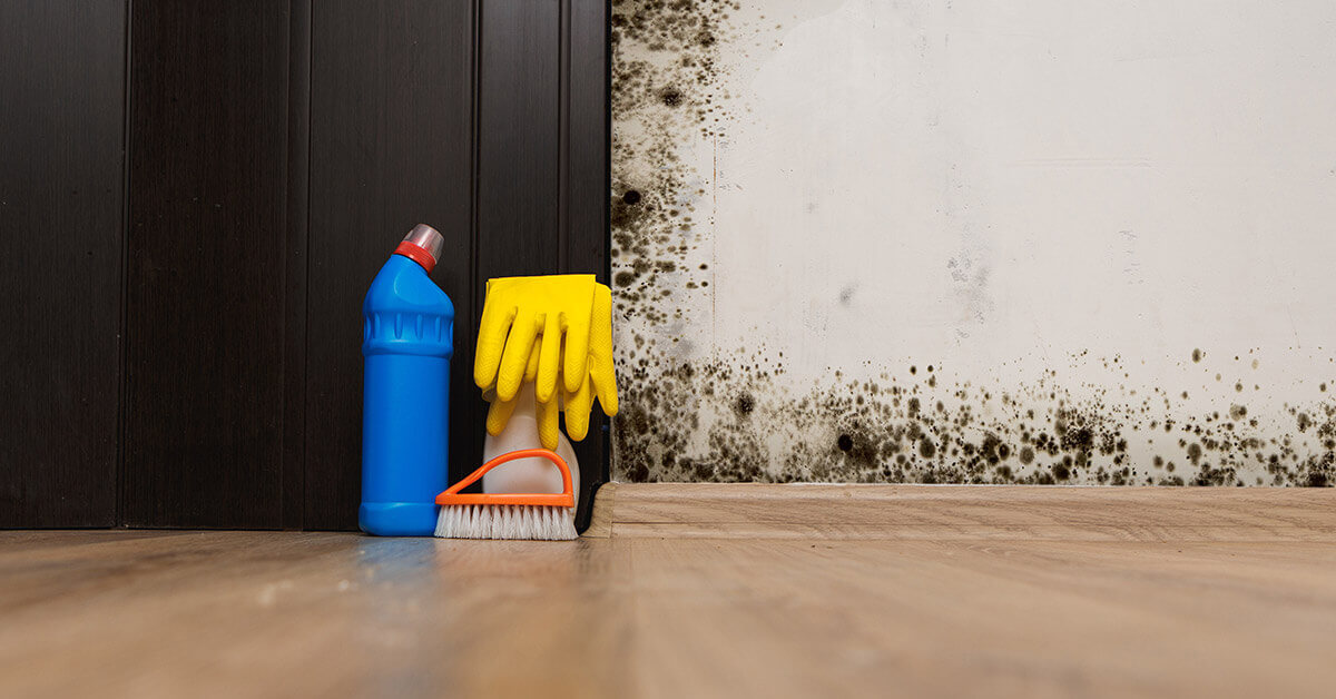 Mold cleaning essentials